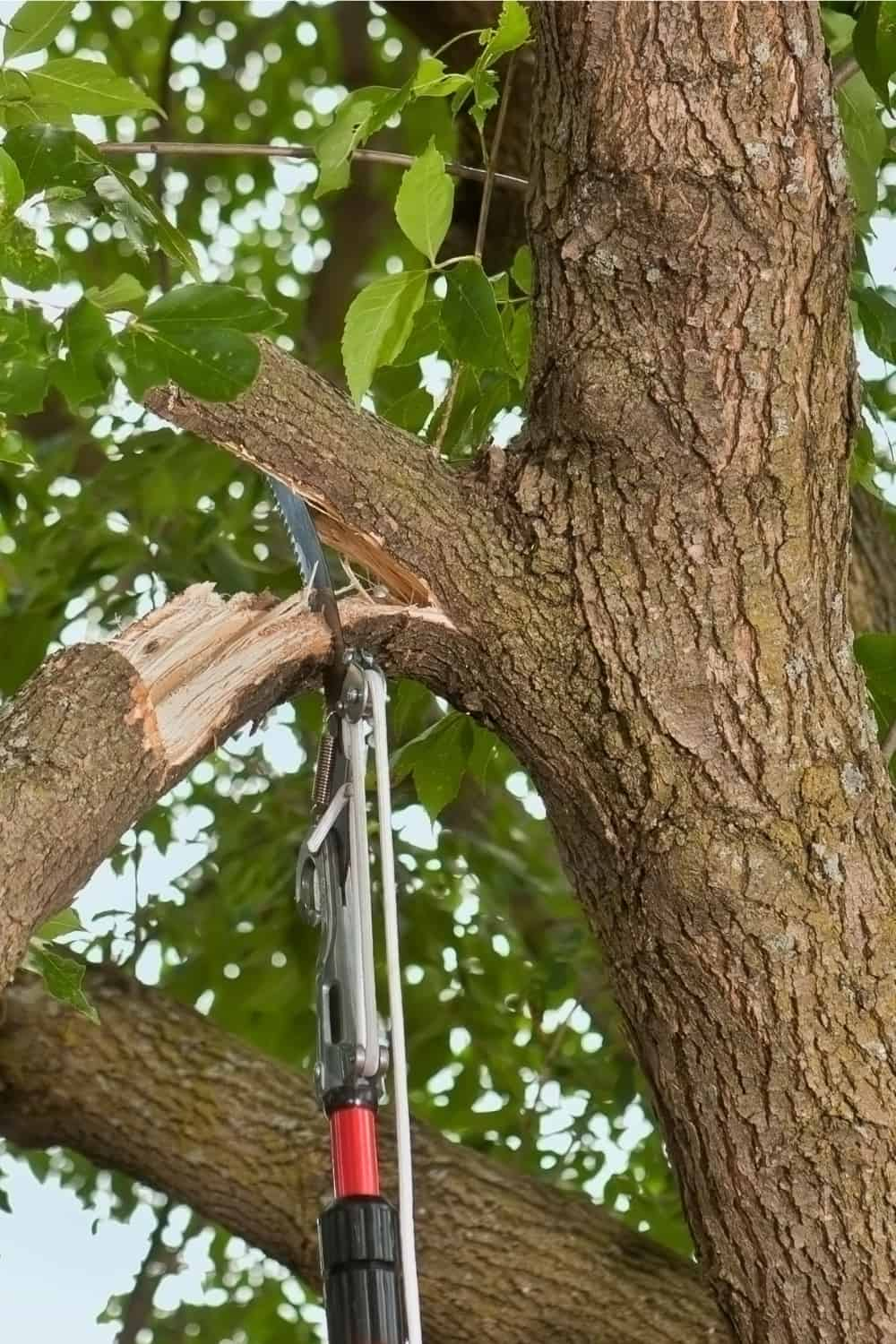 pole saw cutting down broken branch from a tree
