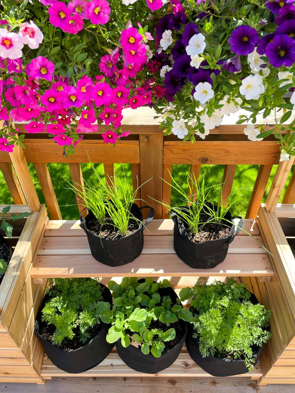 vegetable garden on shelves with hanging baskets above