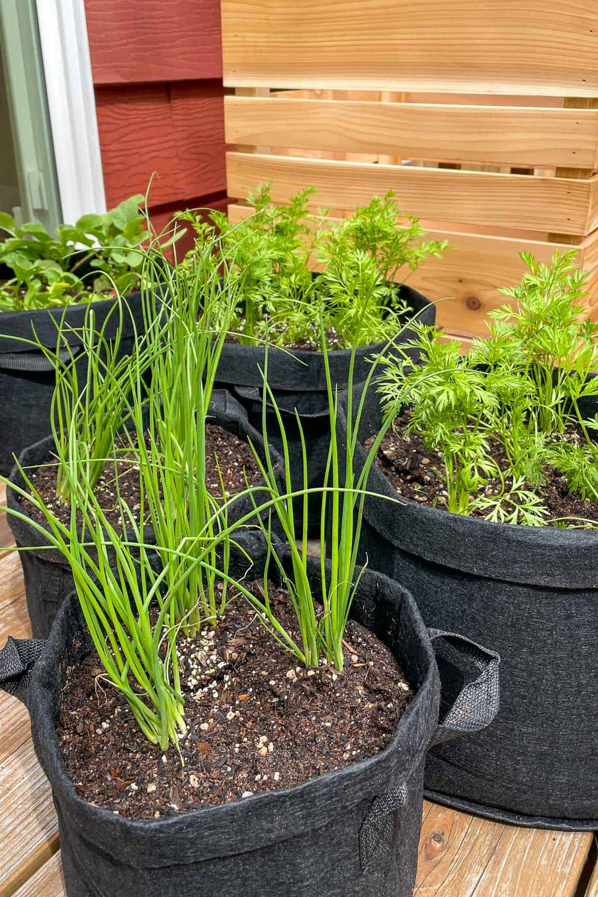 grow bags with various vegetables next to planter box