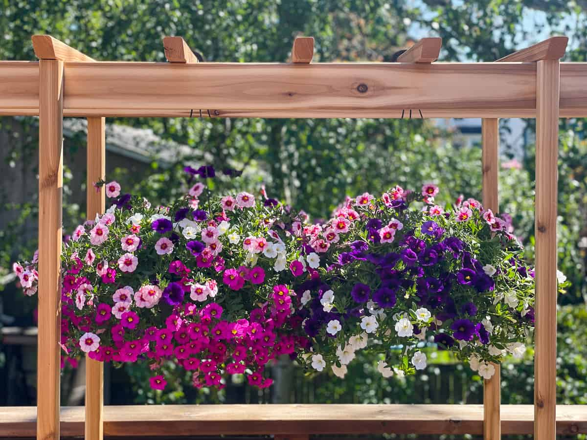 baskets of flowers hanging from arbor over DIY outdoor plant stand
