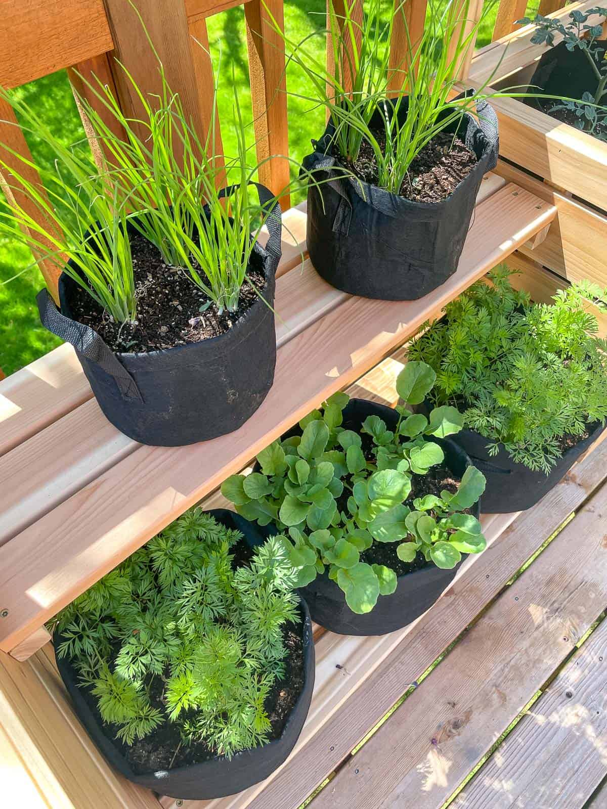 vegetable garden in grow bags on outdoor plant stand