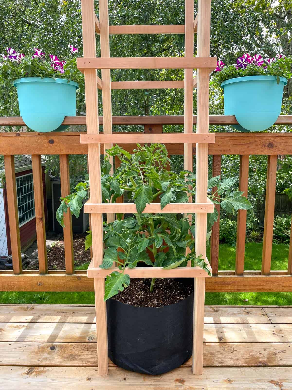 DIY tomato trellis for pots or in ground