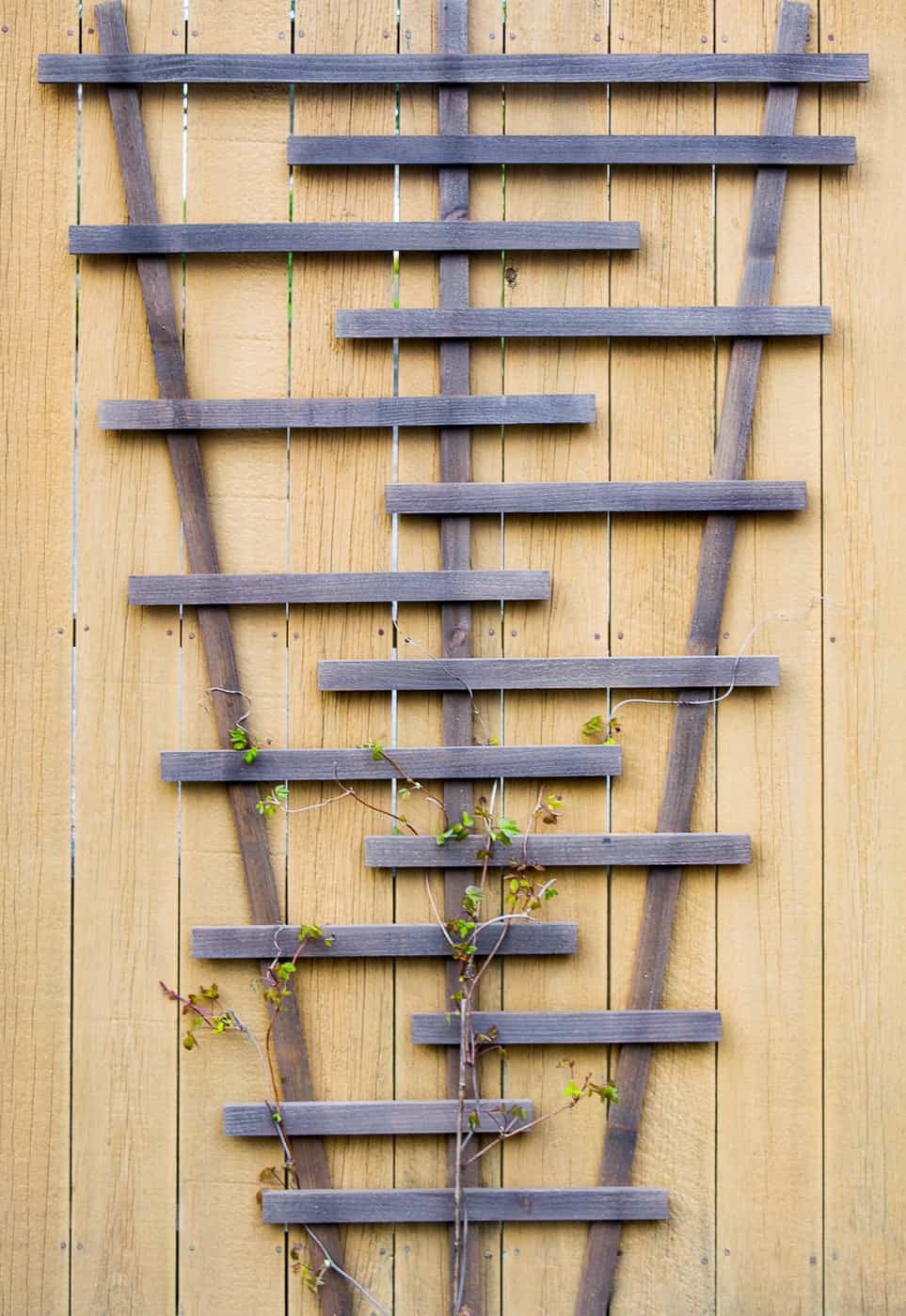 DIY trellis attached to fence