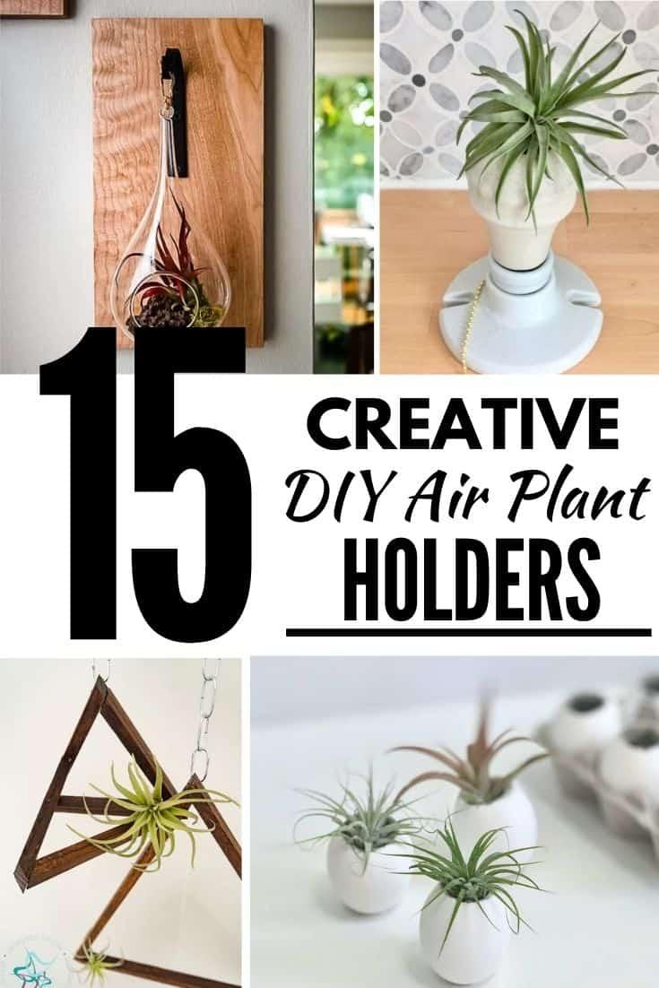 15 Creative DIY Air Plant Holder Ideas